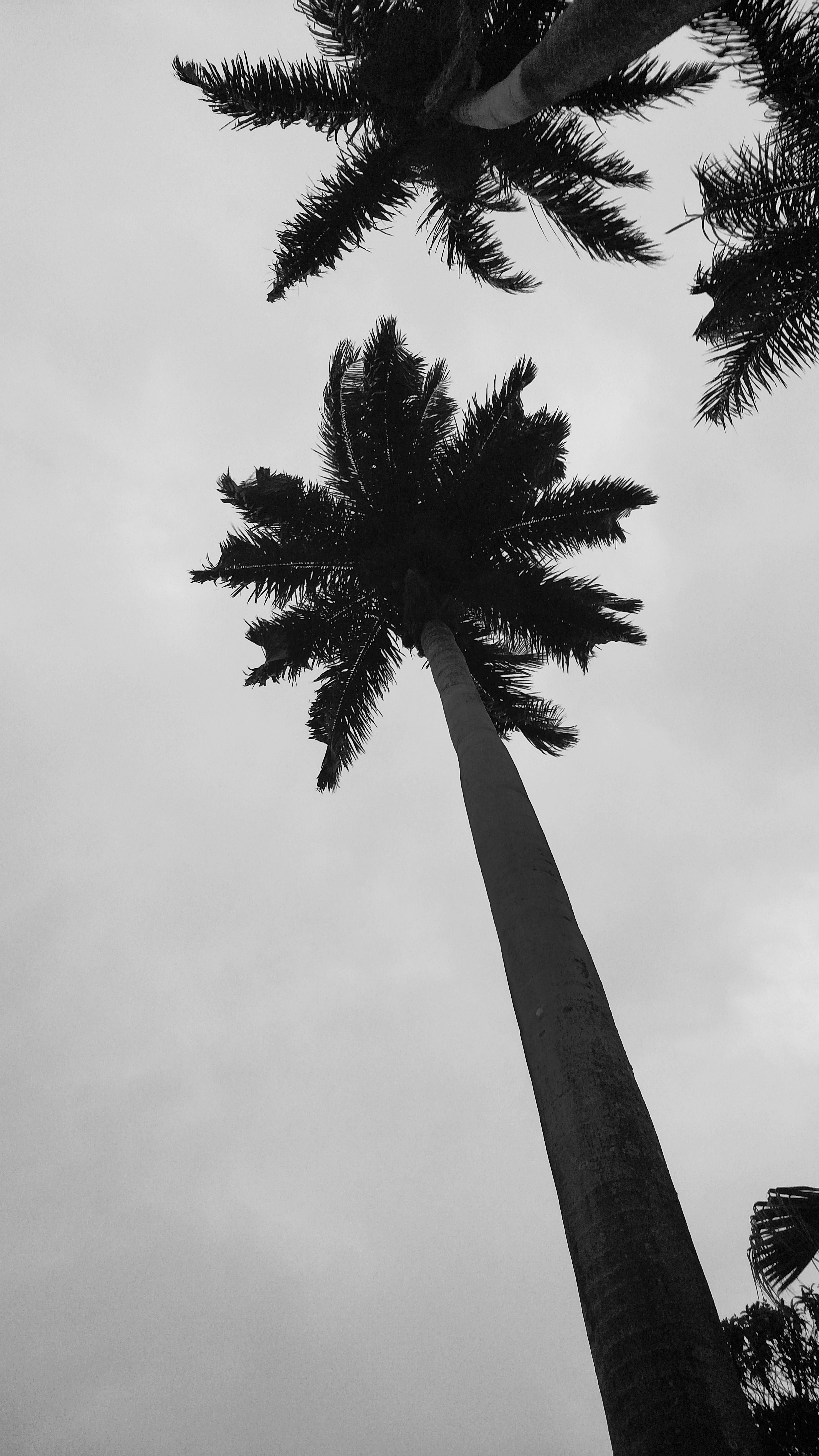 free stock photo of beach black and white palm tree