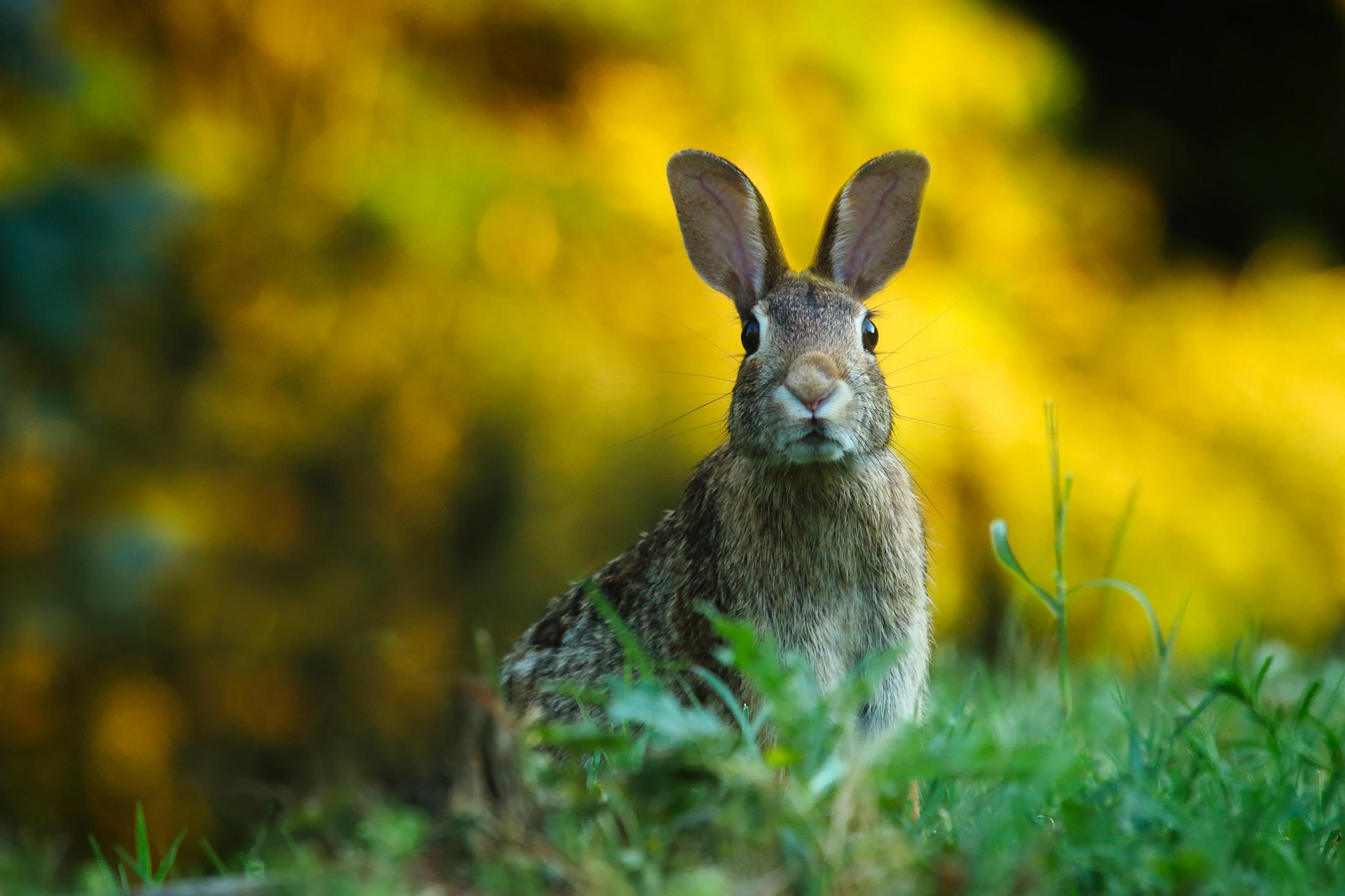 free stock photos of rabbit pexels