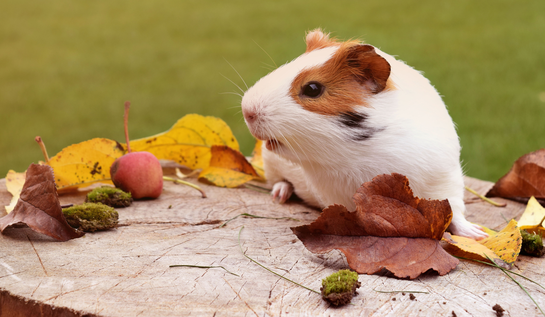 close up of animal eating wood free stock photo