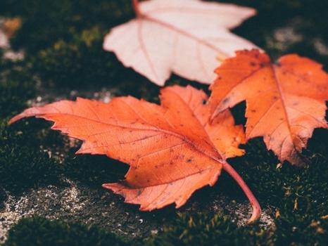 Orange Leaves on Black Surface