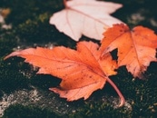 nature, leaves, fall