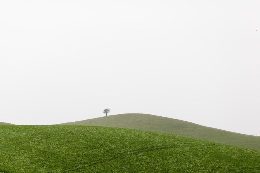 landscape, nature, grass
