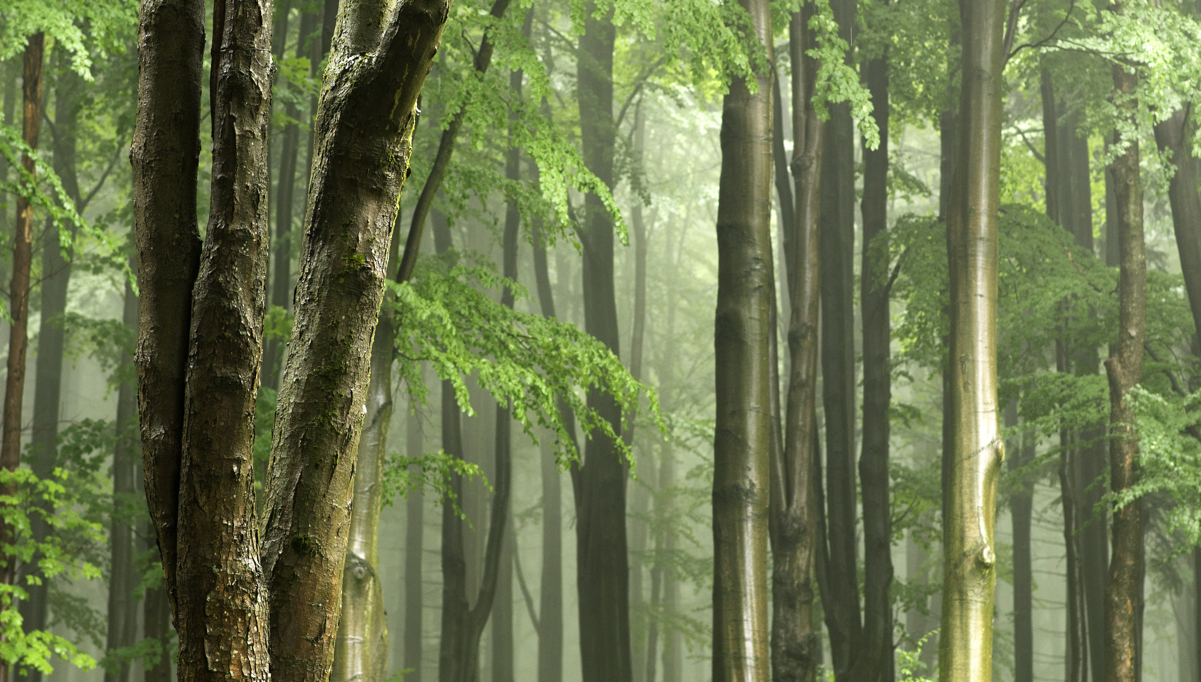Panoramic View Of Trees In Forest 256655 on Color Learn Rain