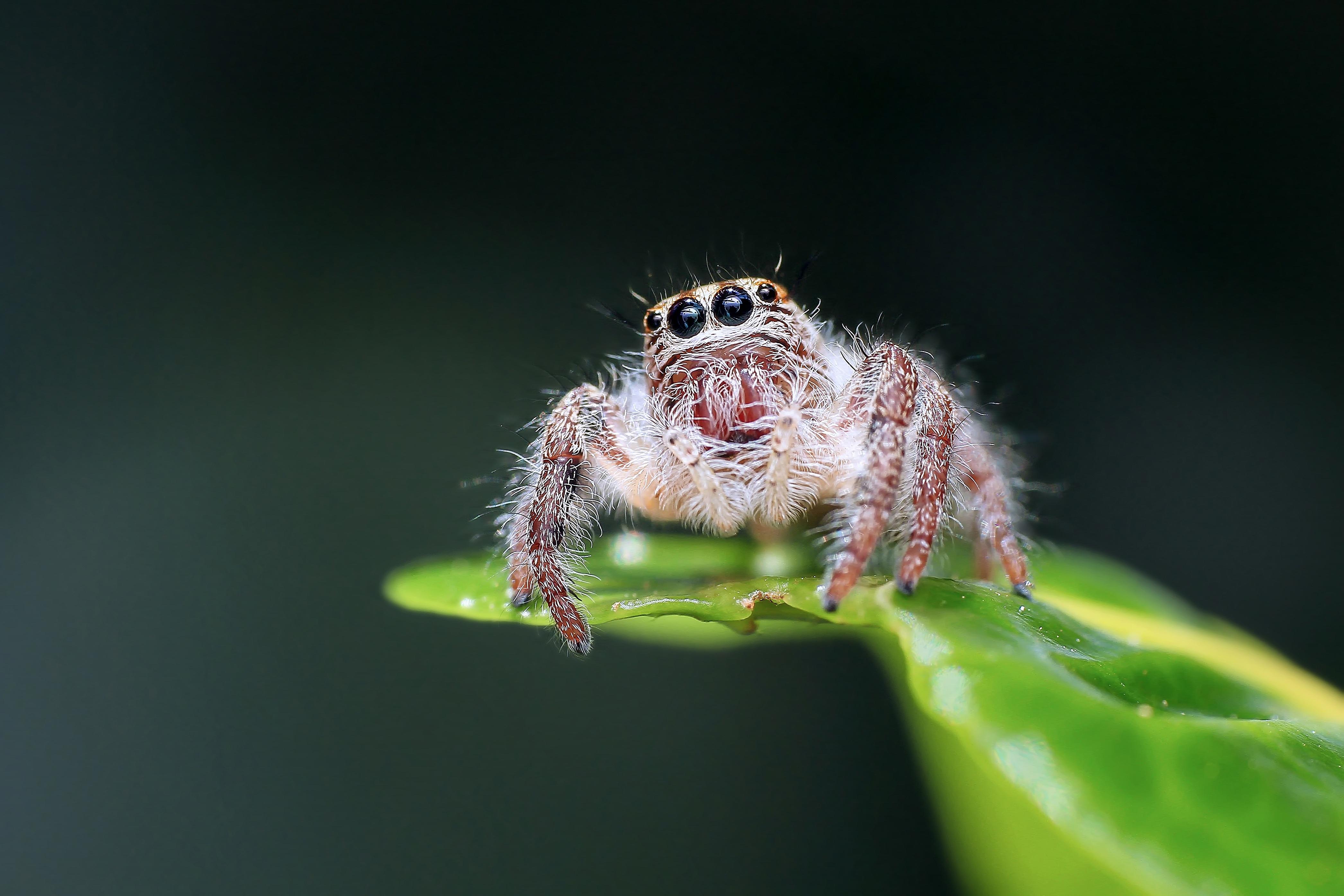 spider pictures pexels free stock photos
