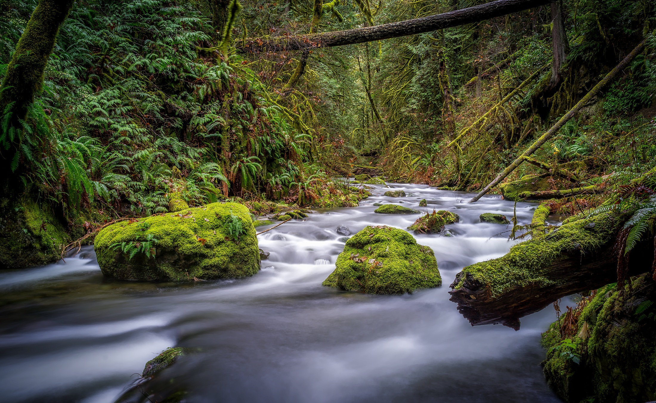 Free Stock Photo Of Beautiful Country Creek