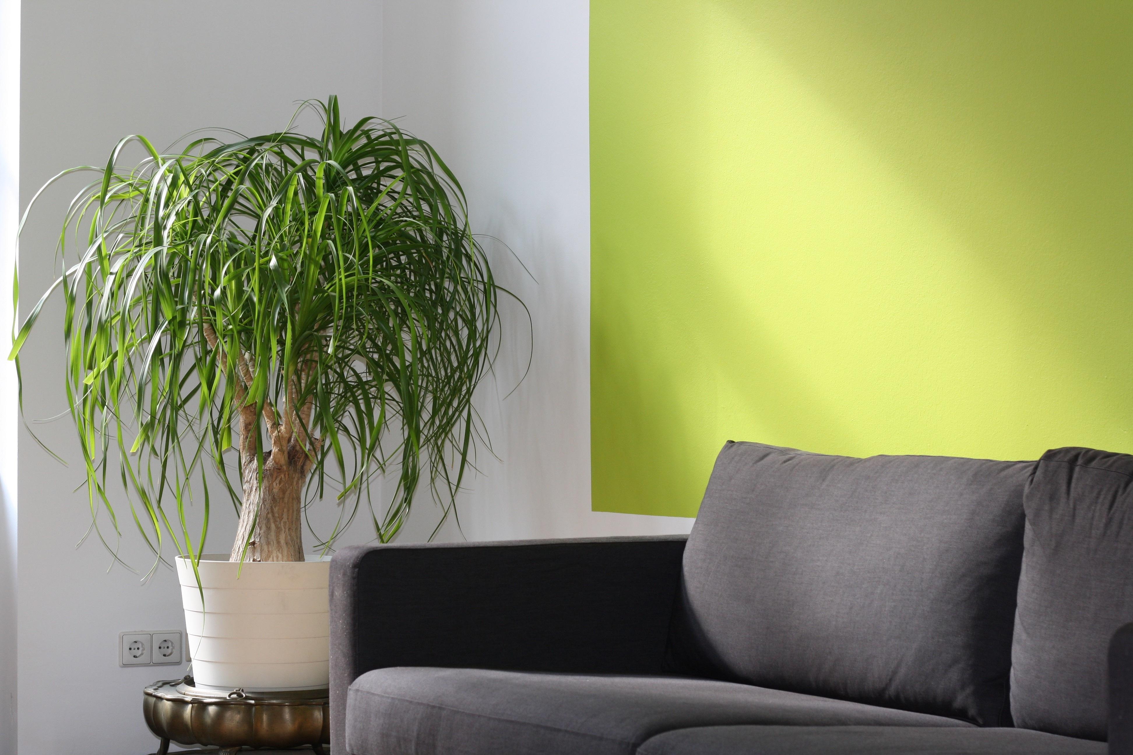 Free stock photo of apartment comfort contemporary for Combinacion de colores para paredes