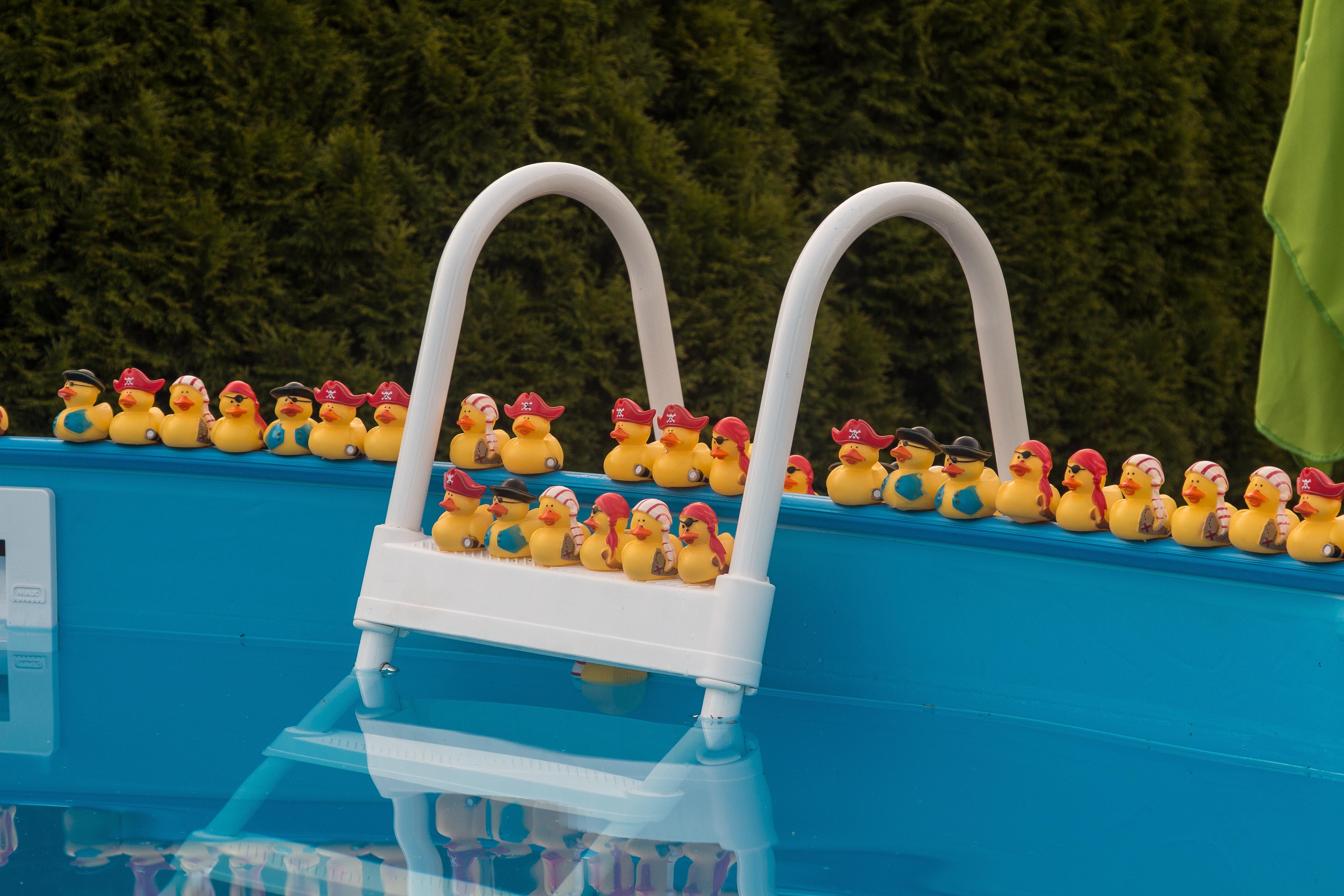 free stock photo of pool pool duck swim swimming pool refresh