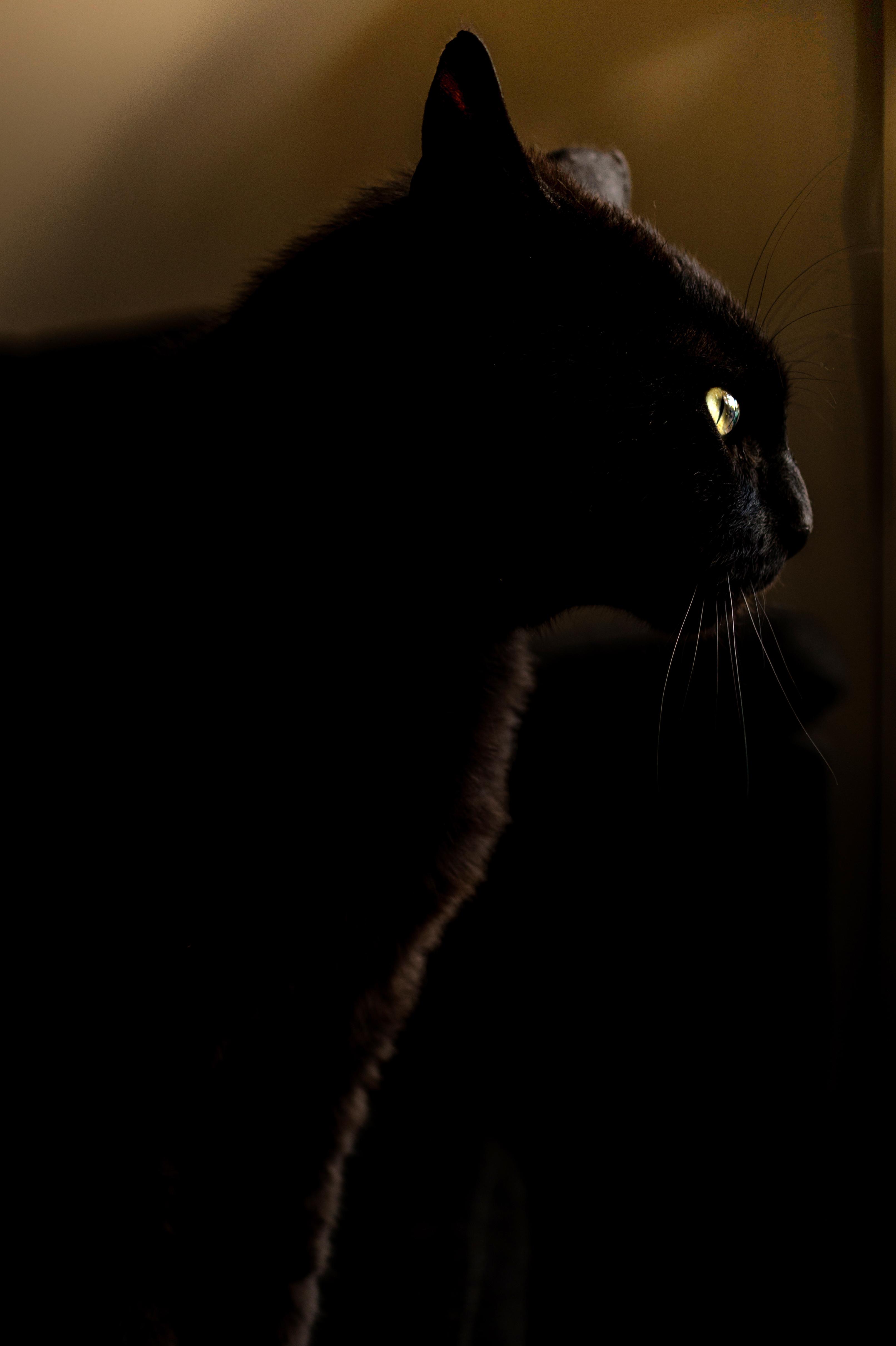Night Cat Productions: Free Stock Photo Of Animal, Black, Cat