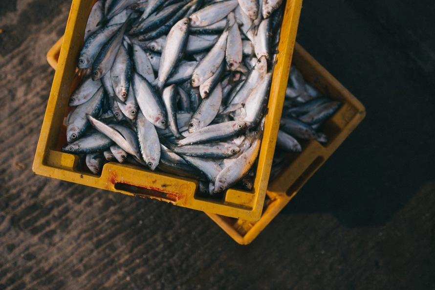 determination of fish freshness