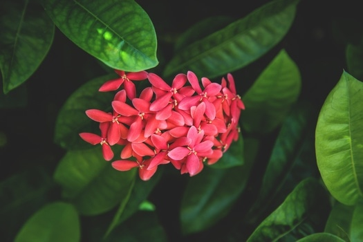 Free stock photo of nature, plant, leaves, flower