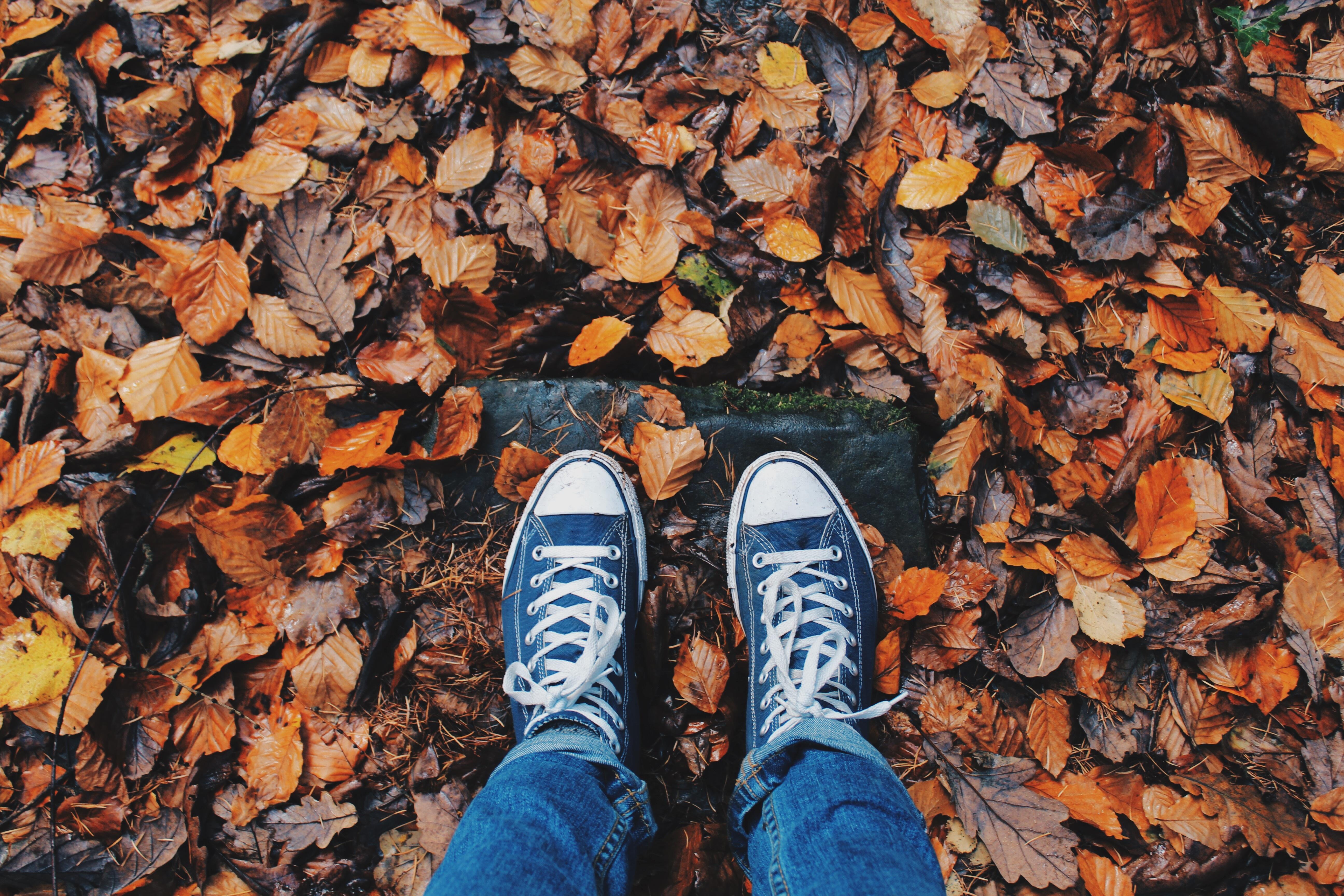 free stock photos of autumn pexels