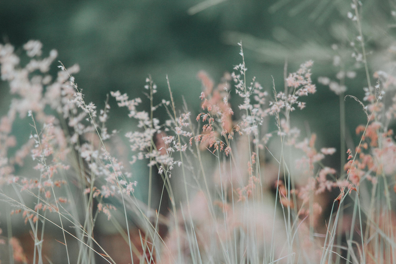 pexels-photo-268261.jpeg (3000×2000)