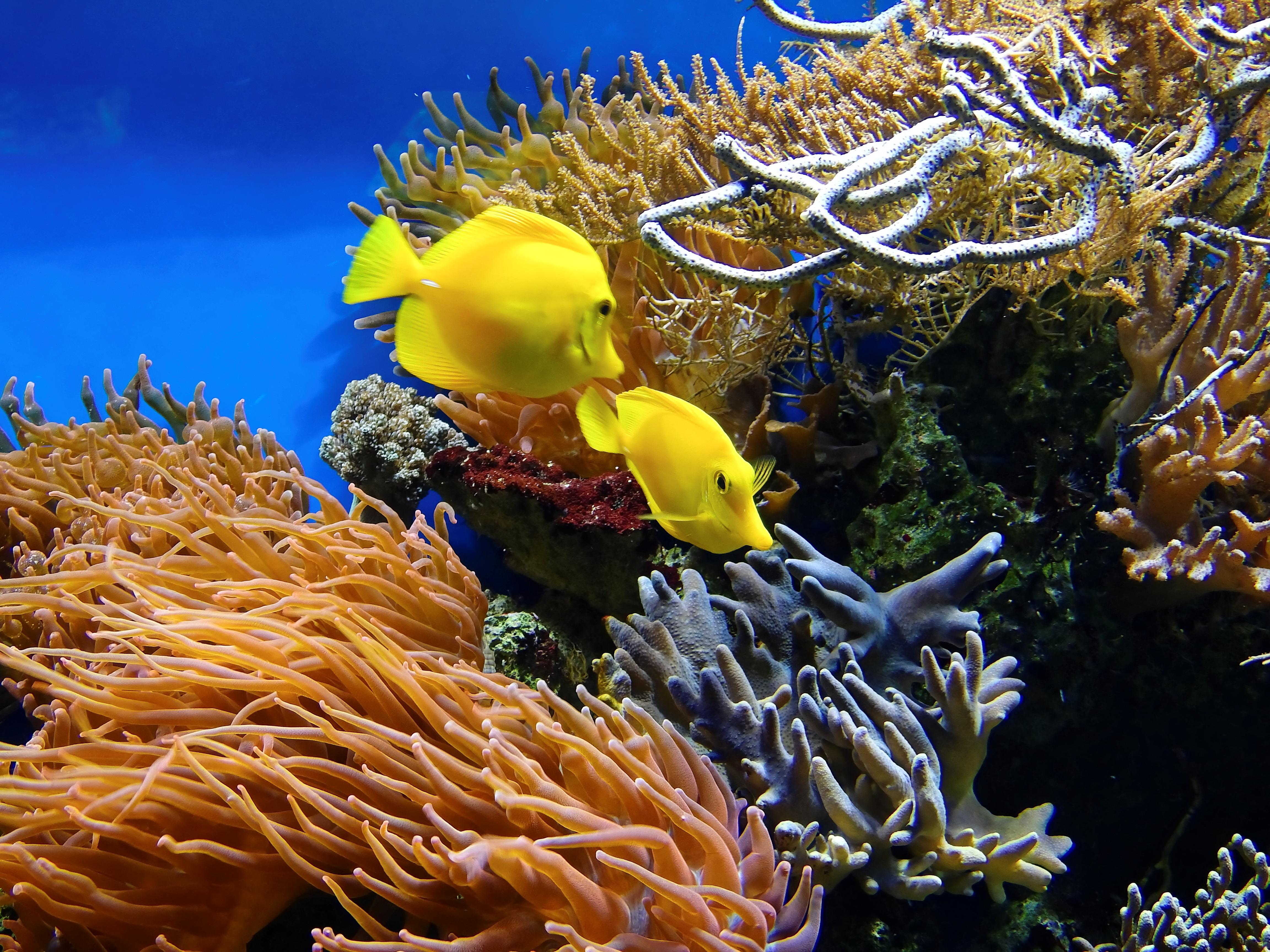 Stock Charts Australia: Free stock photo of aquarium australia coral,Chart
