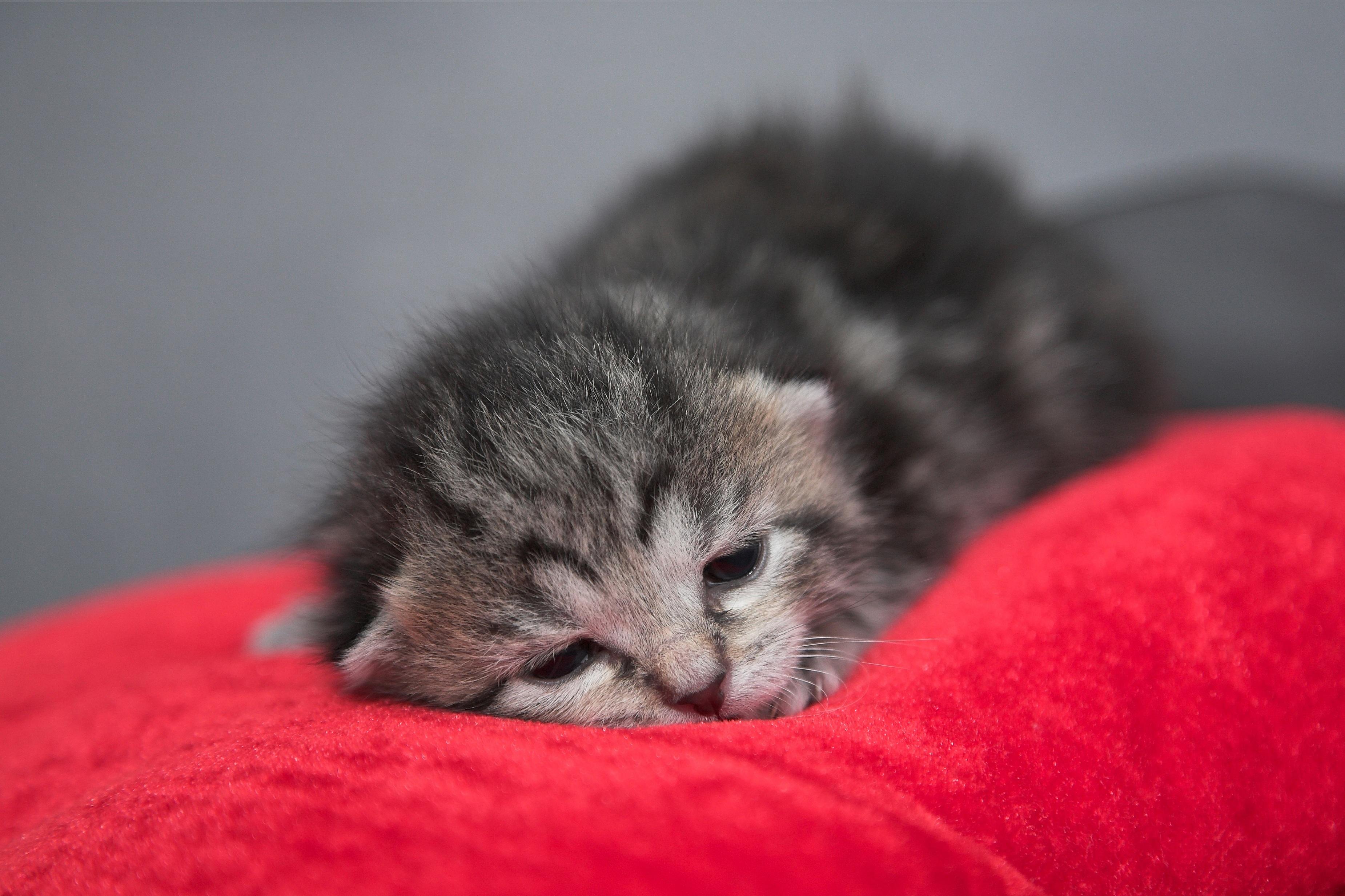 Fettartig schwarze Muschi-Katze nycKostenlose asiatische Pornos vid
