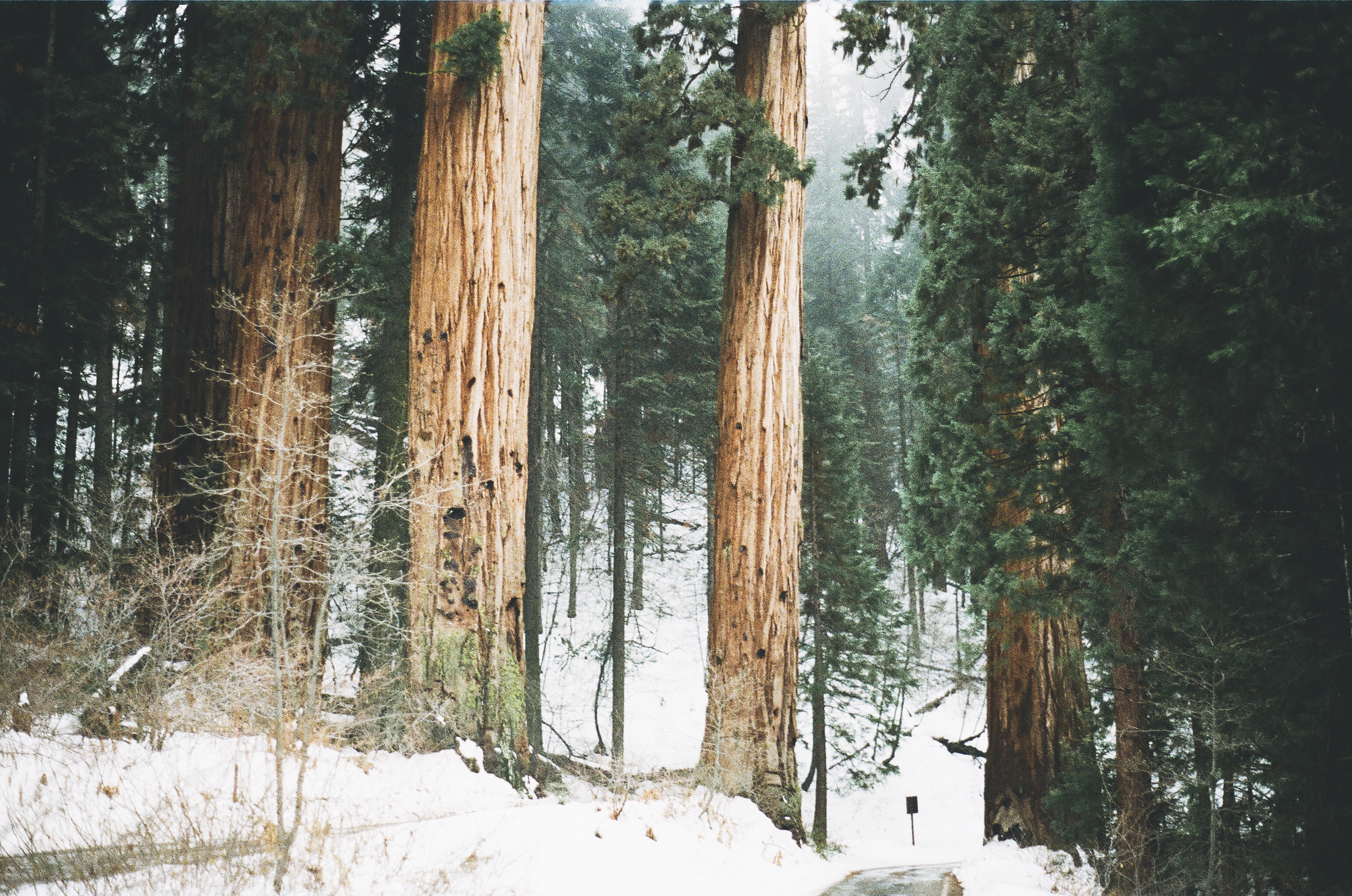winter forest trees snow - photo #3