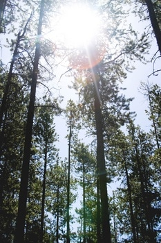 Tall Trees Under Sunny Sky during Daytime