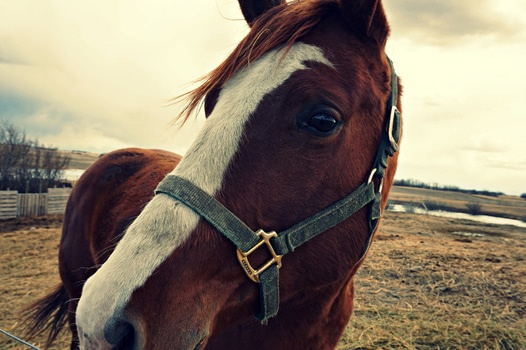Free stock photo of animal, head, eye, horse