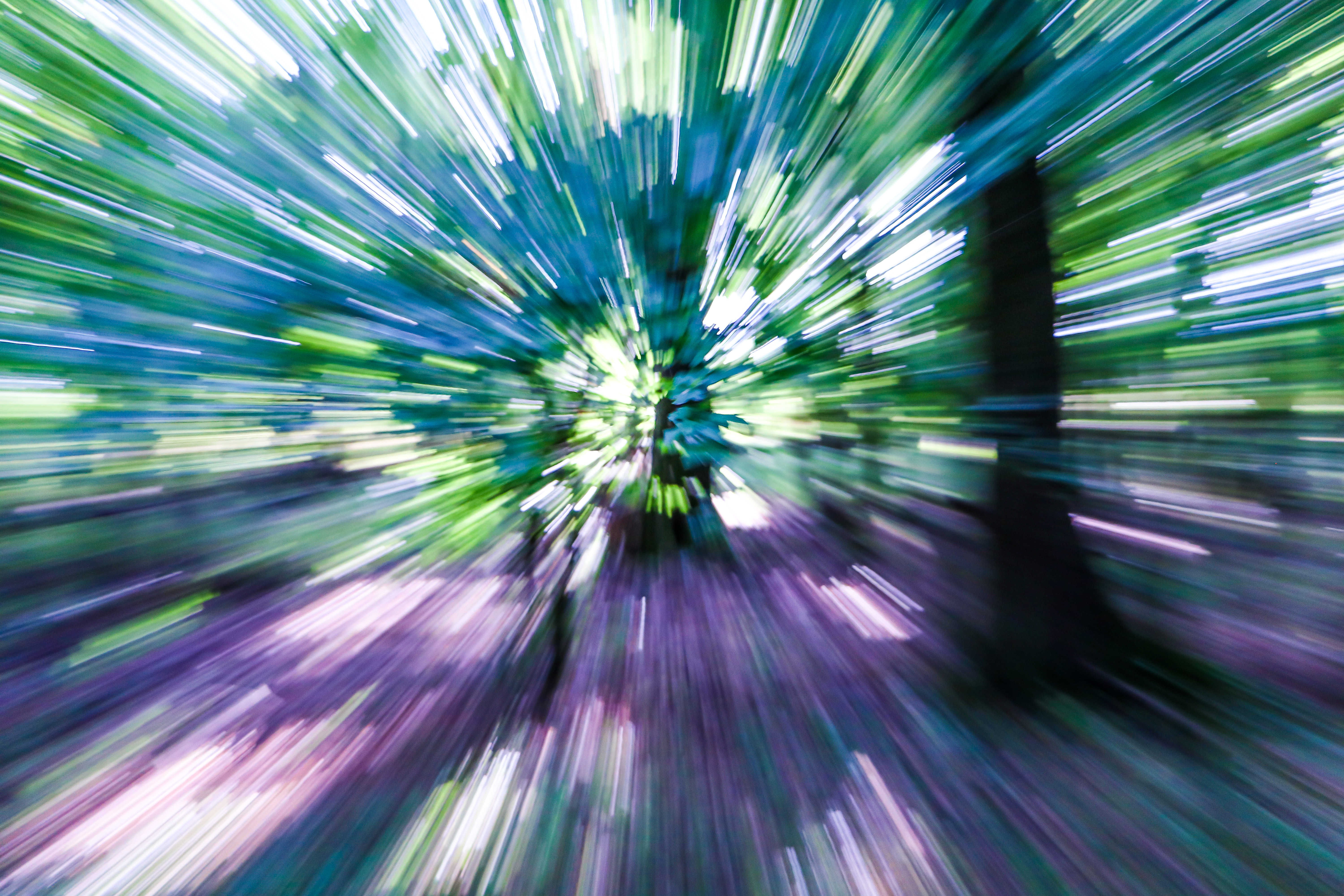 Free stock photo of abstract, forest, high speed