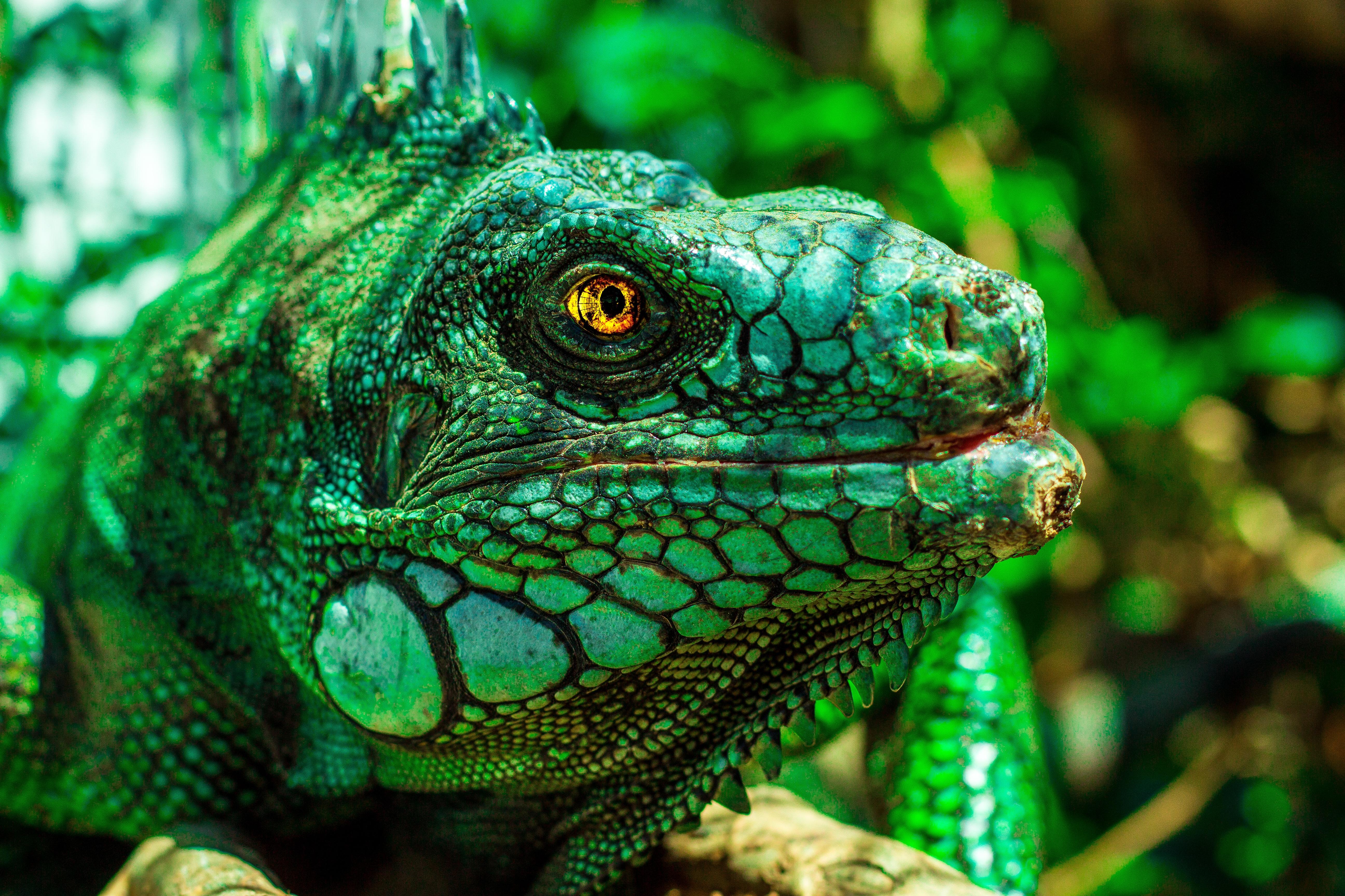 iguana eye painting - photo #20