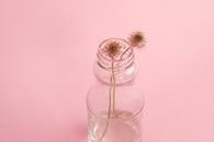 flowers, vase, dandelions