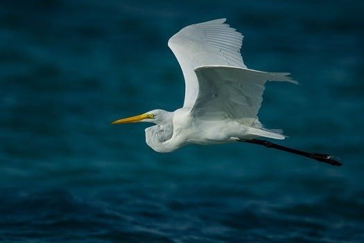 Free stock photo of bird, flying, water