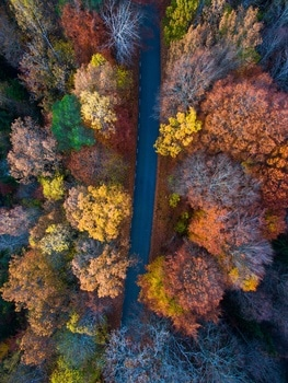 Free stock photo of bird's eye view, road, nature, trees