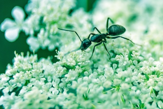 Free stock photo of flowers, insect, macro, close-up