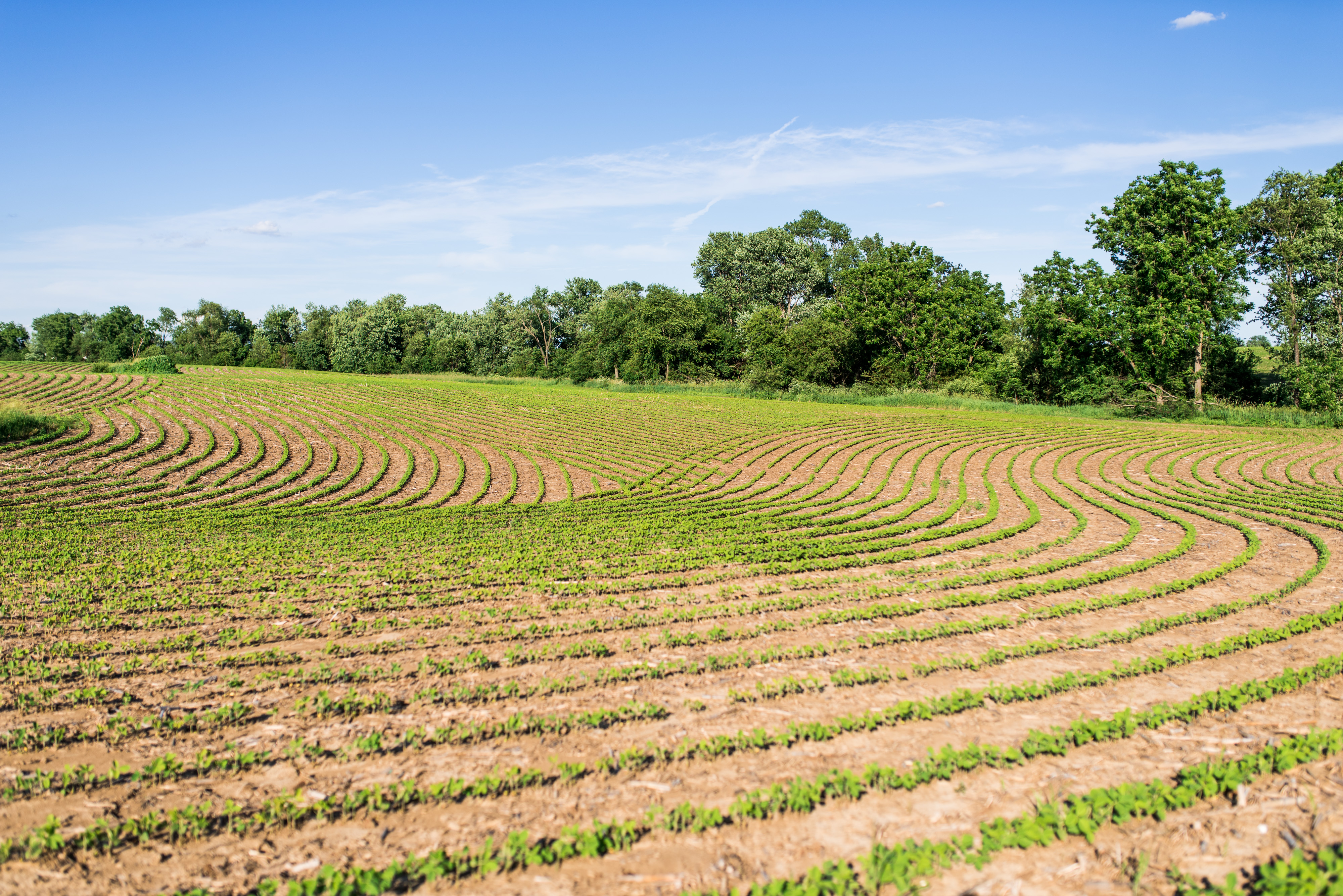 Farmers rely on phenology to plant, fertilize and apply pesticides.