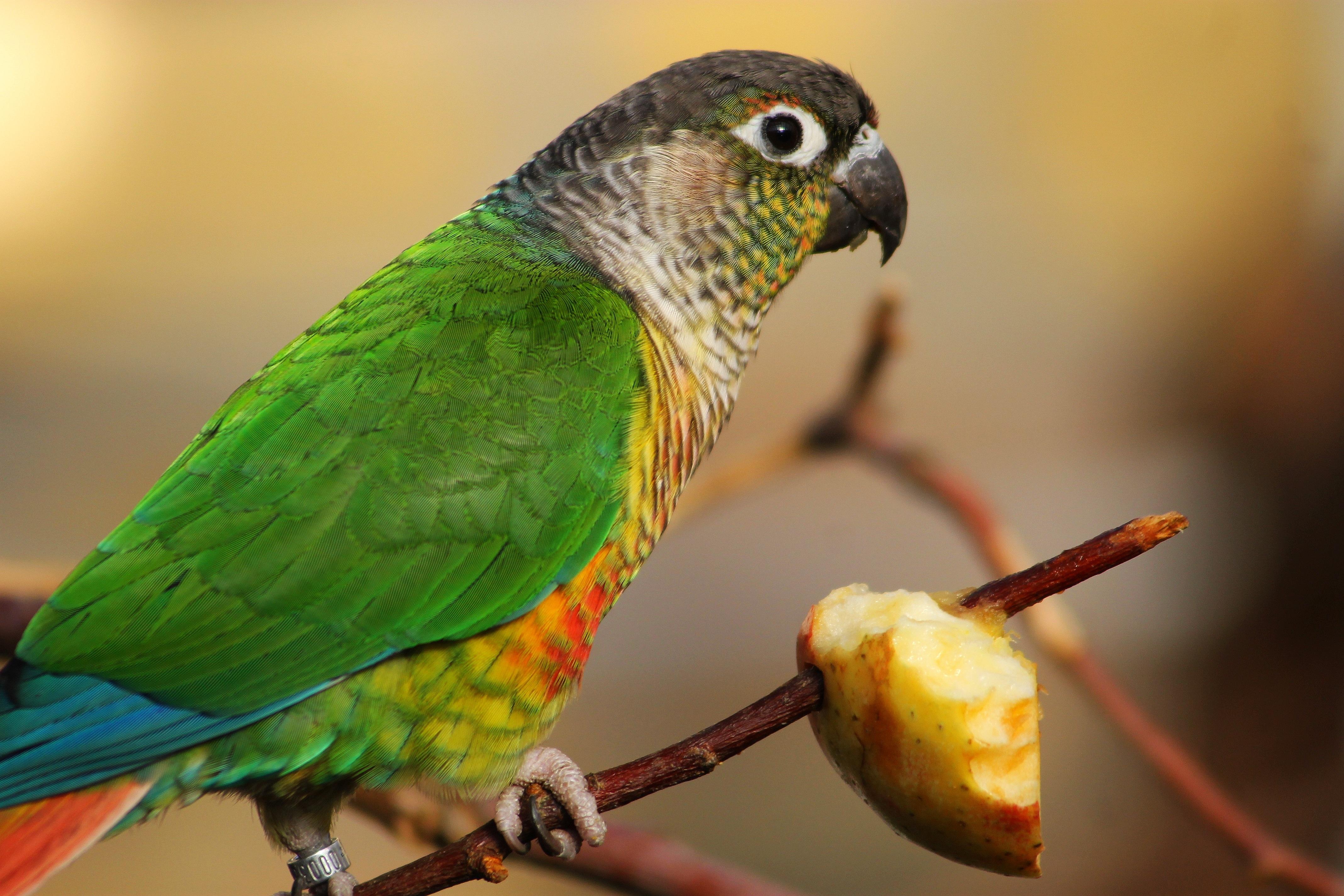 free stock photo of állatportré bird color