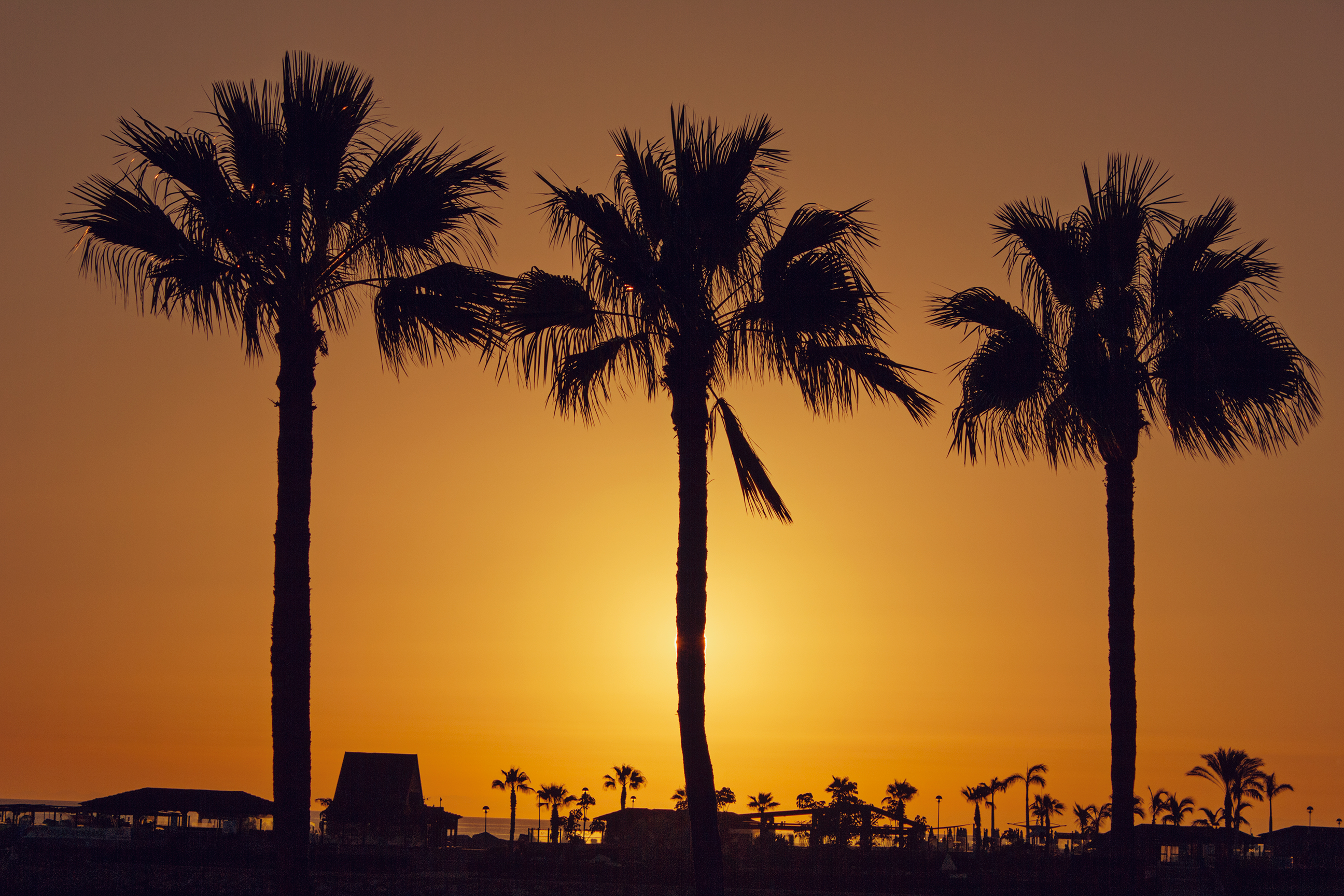 Silhouette Palm Trees on Beach Against Sky · Free Stock Photo