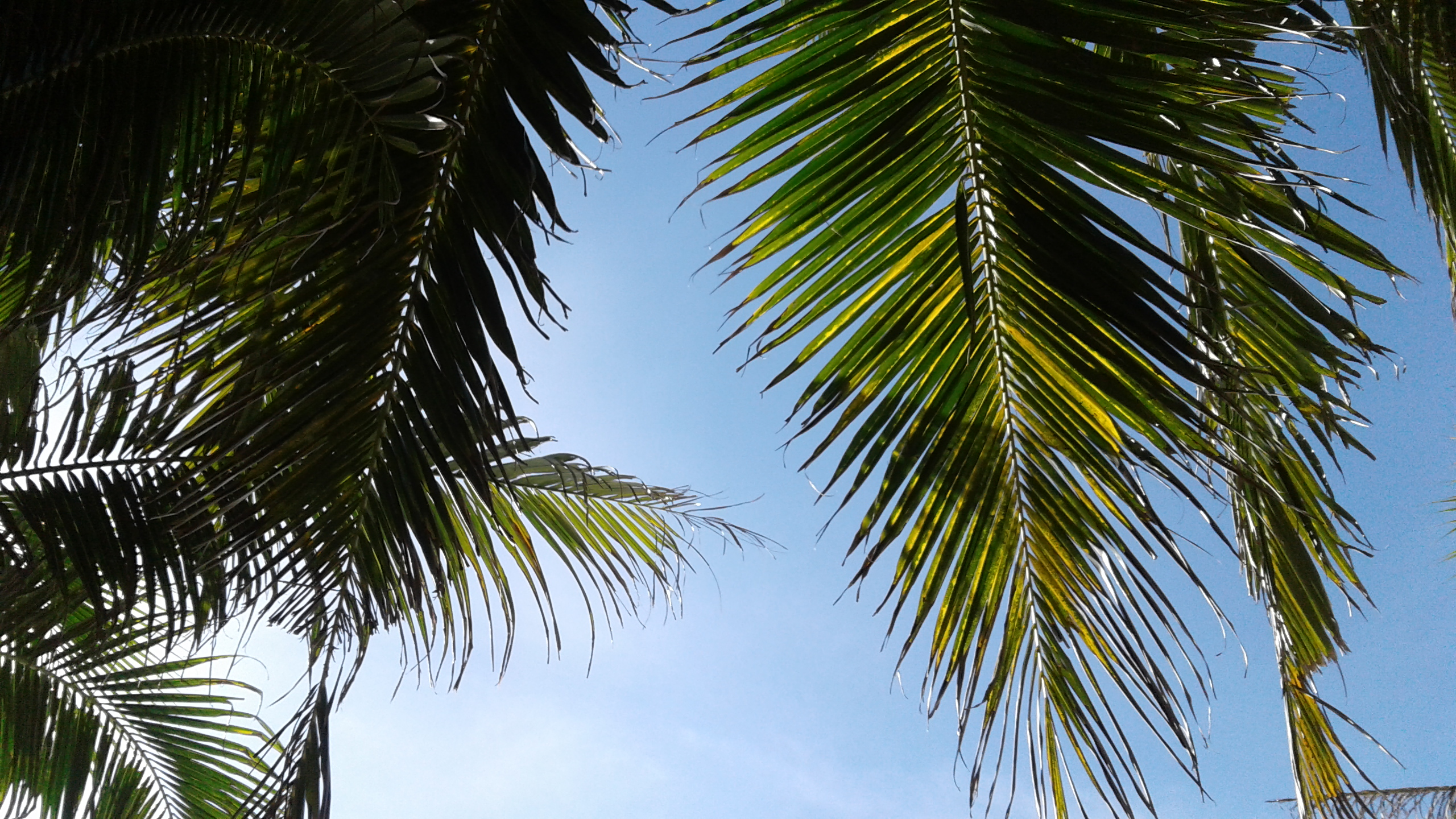free stock photo of beach palm tree sky