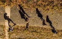 people, walking, shadows