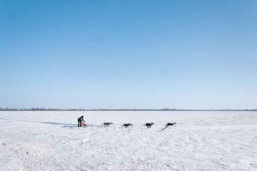 Free stock photo of snow, man, dogs, running