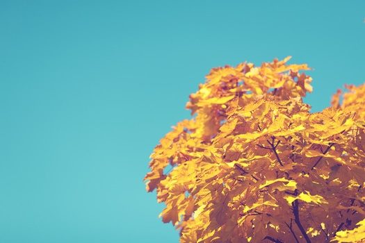 Yellow Leave Tree Under Blue Sky during Daytime