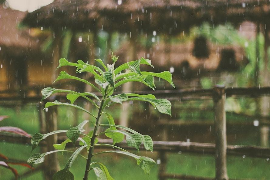 plant, rain, waterdrops