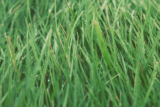 Free stock photo of nature, grass, lawn, meadow