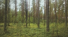 wood, forest, trees