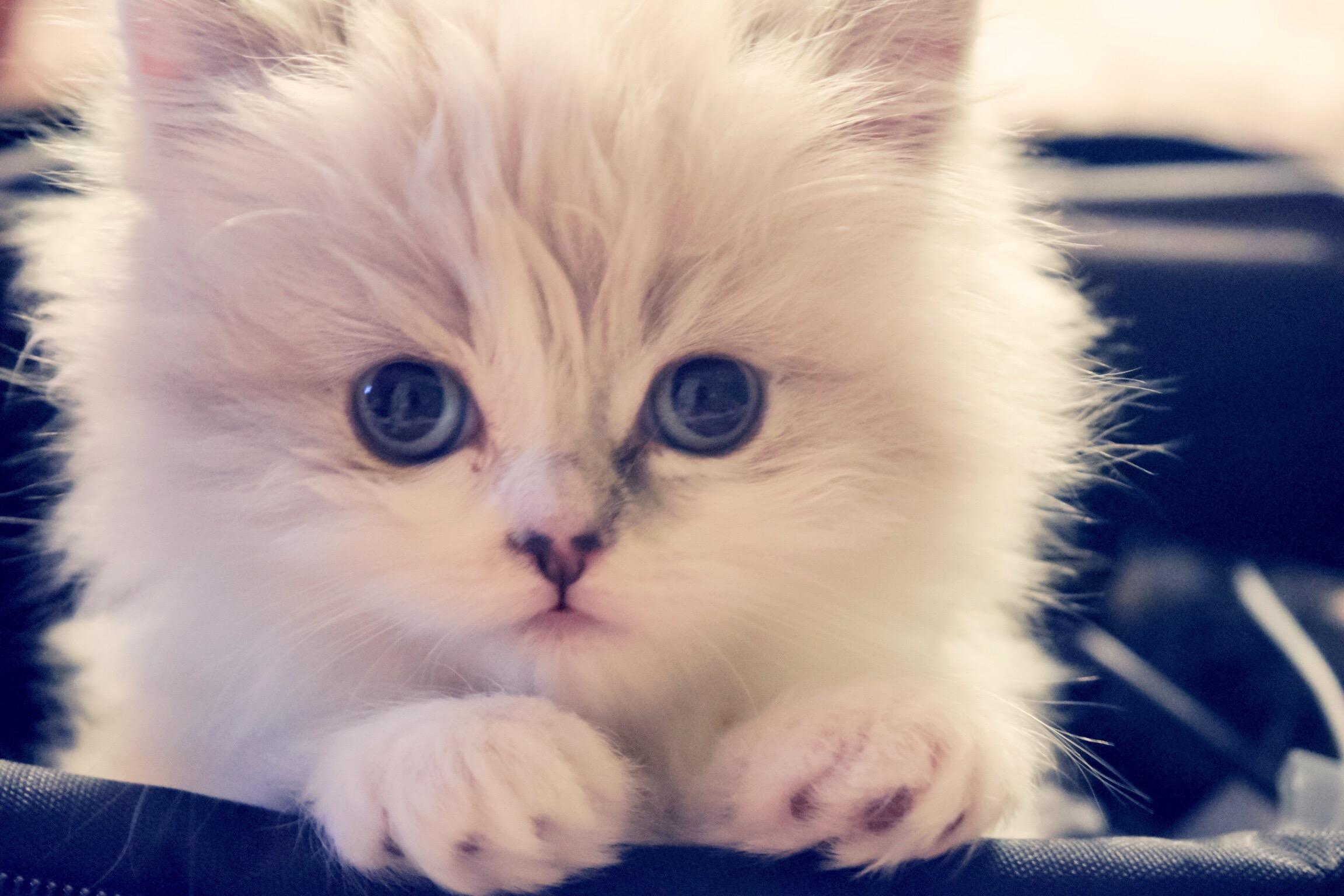High Cat Big Eyes
