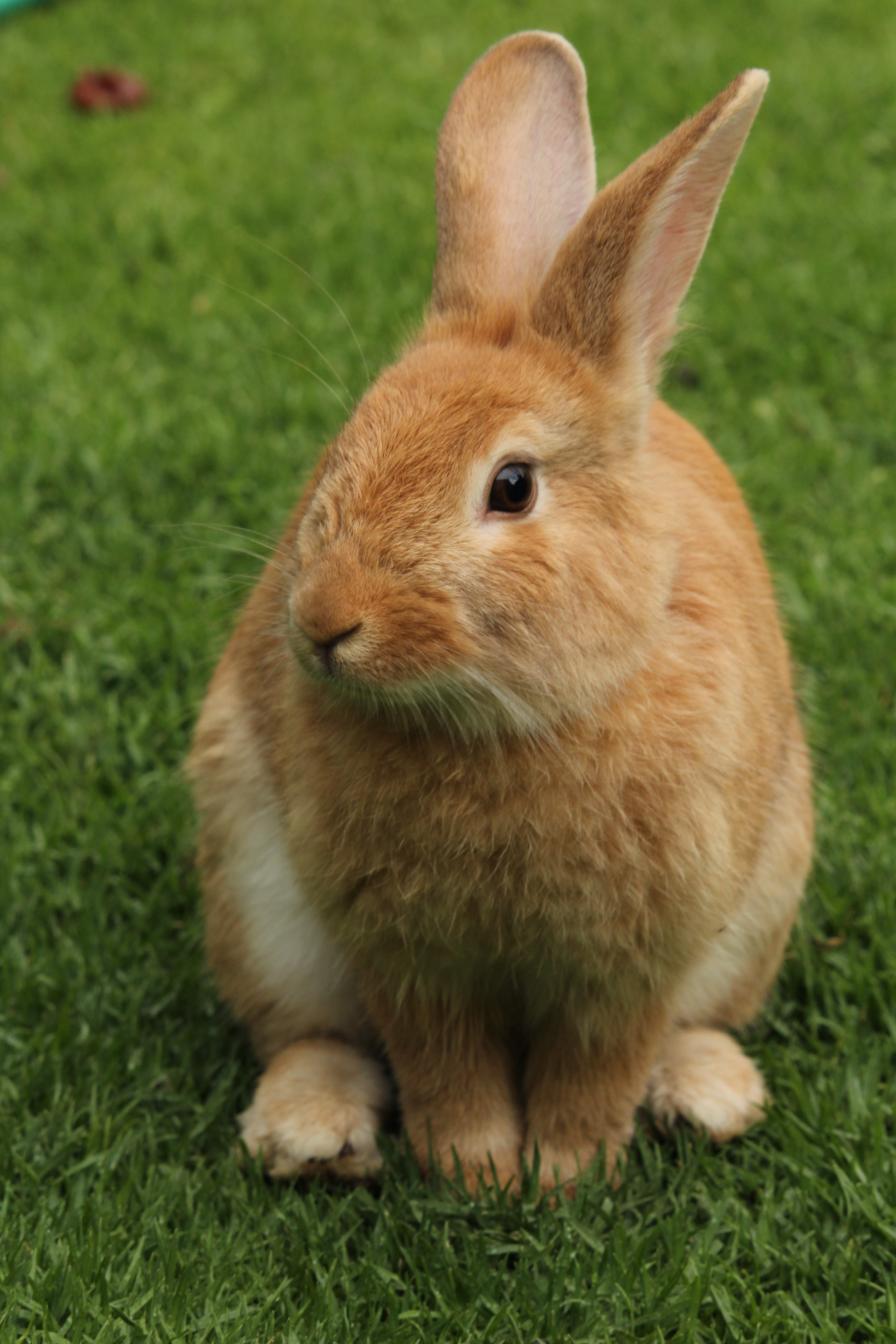Close-up of Rabbit on Field · Free Stock Photo