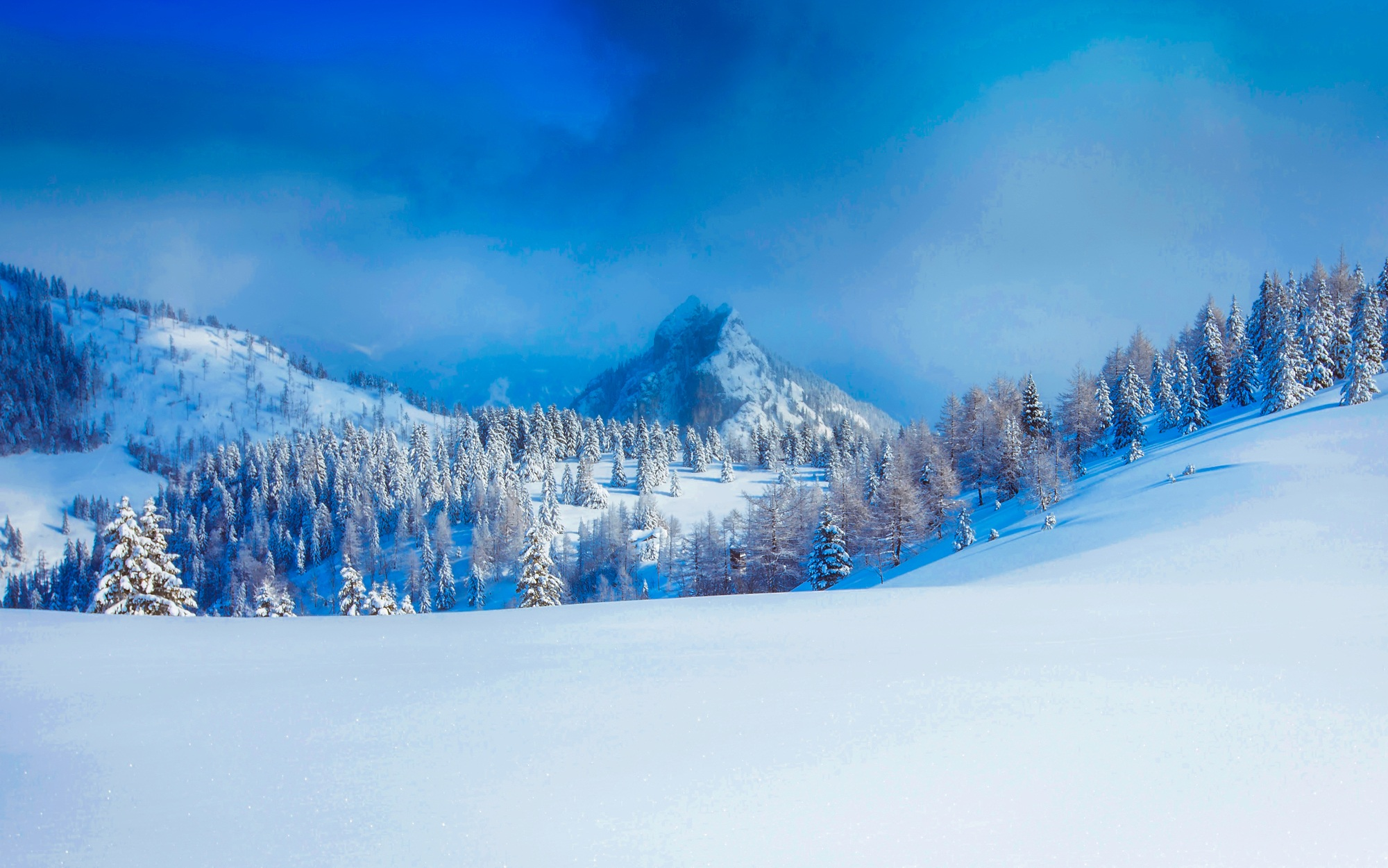 panoramic view of trees on snow covered landscape 183 free