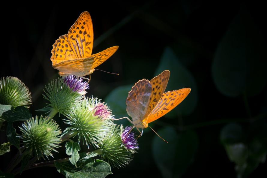 naturaleza, naranja, detalles