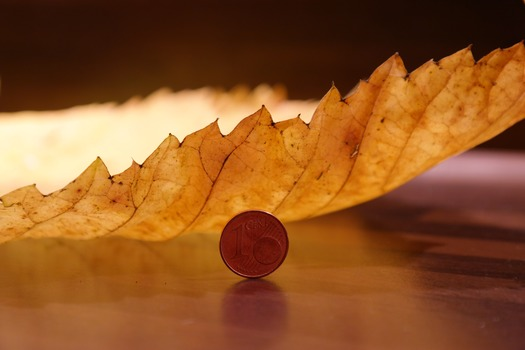 Round Coin Beside Yellow Leaf