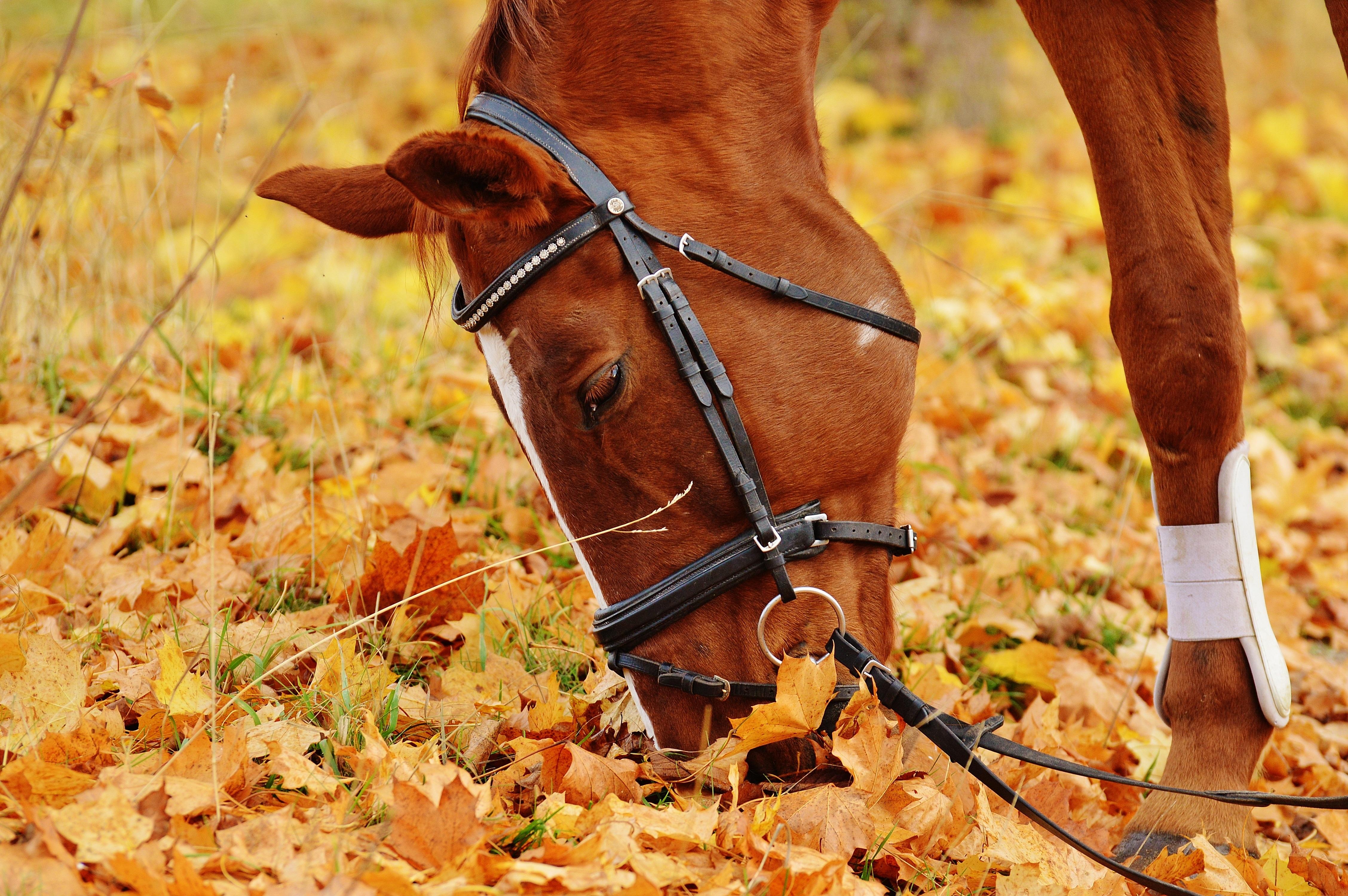 Výsledek obrázku pro horse and autumn