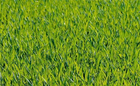 Green Grass Close Up Photograph