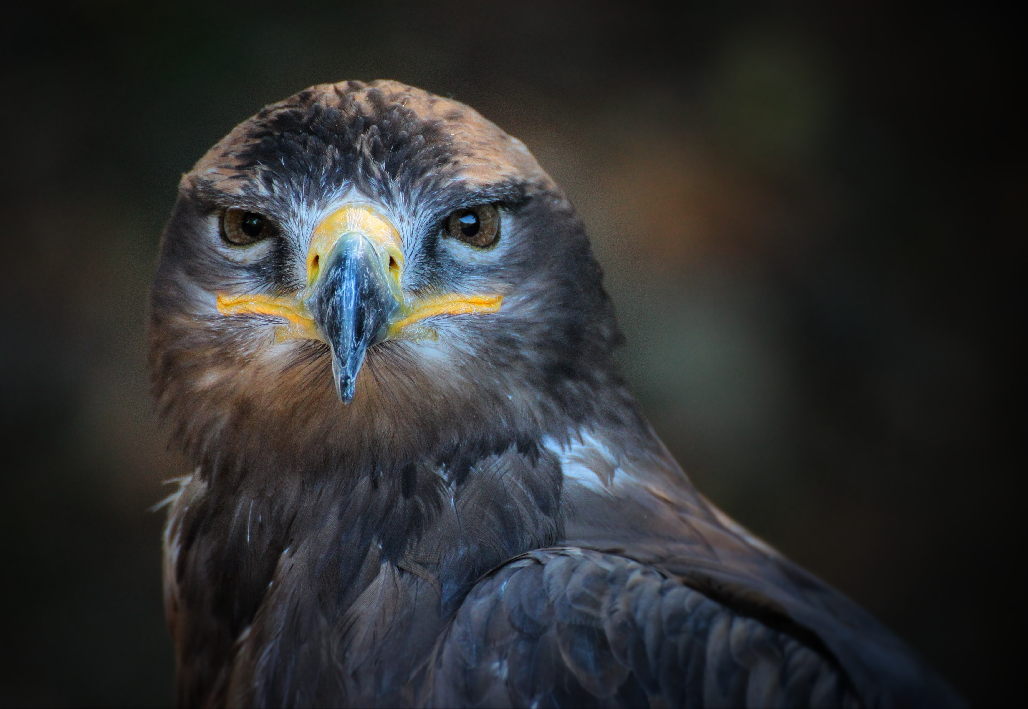 Close Up Bird Paintings Famous