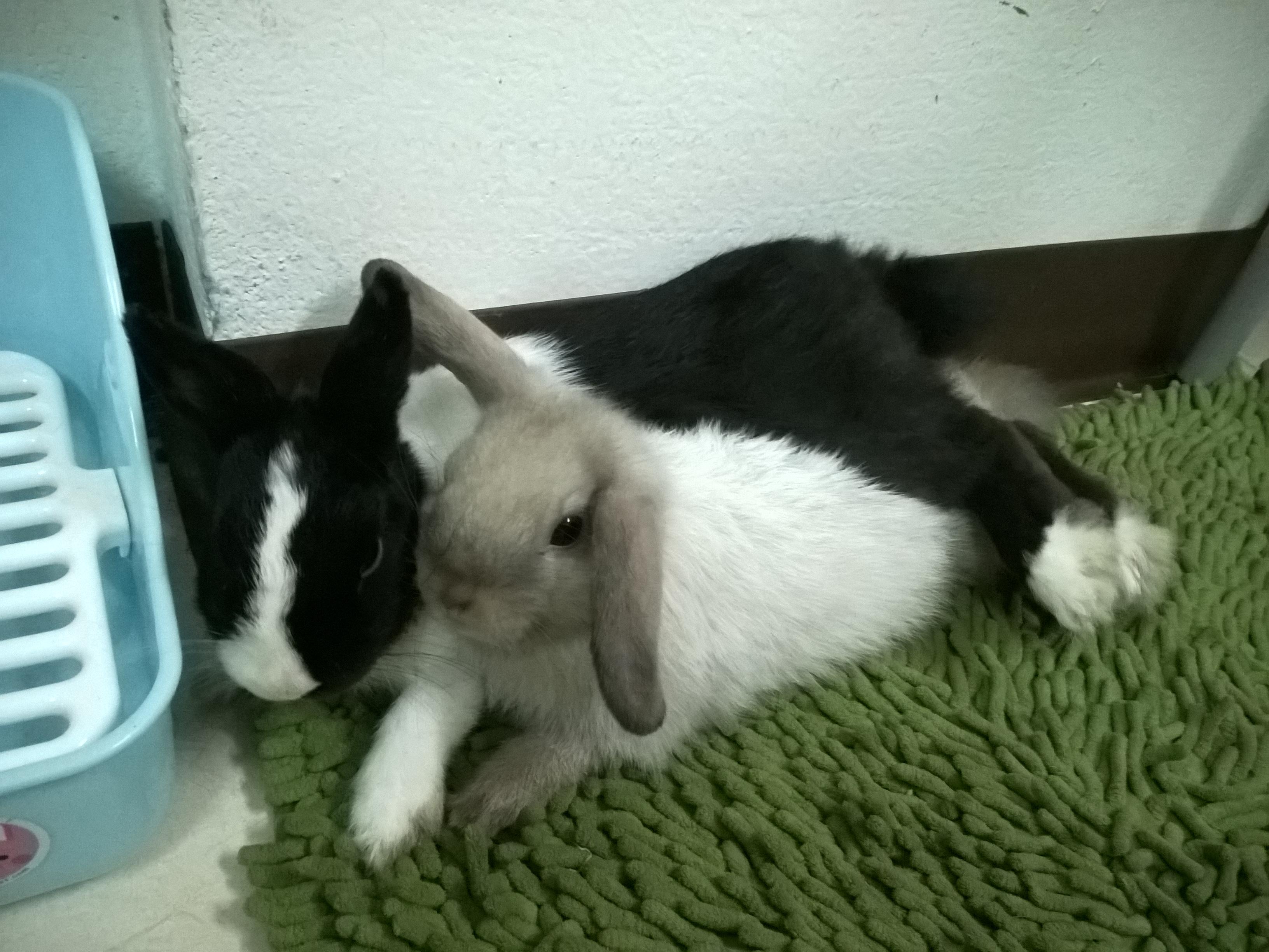 free stock photo of easter bunny rabbit
