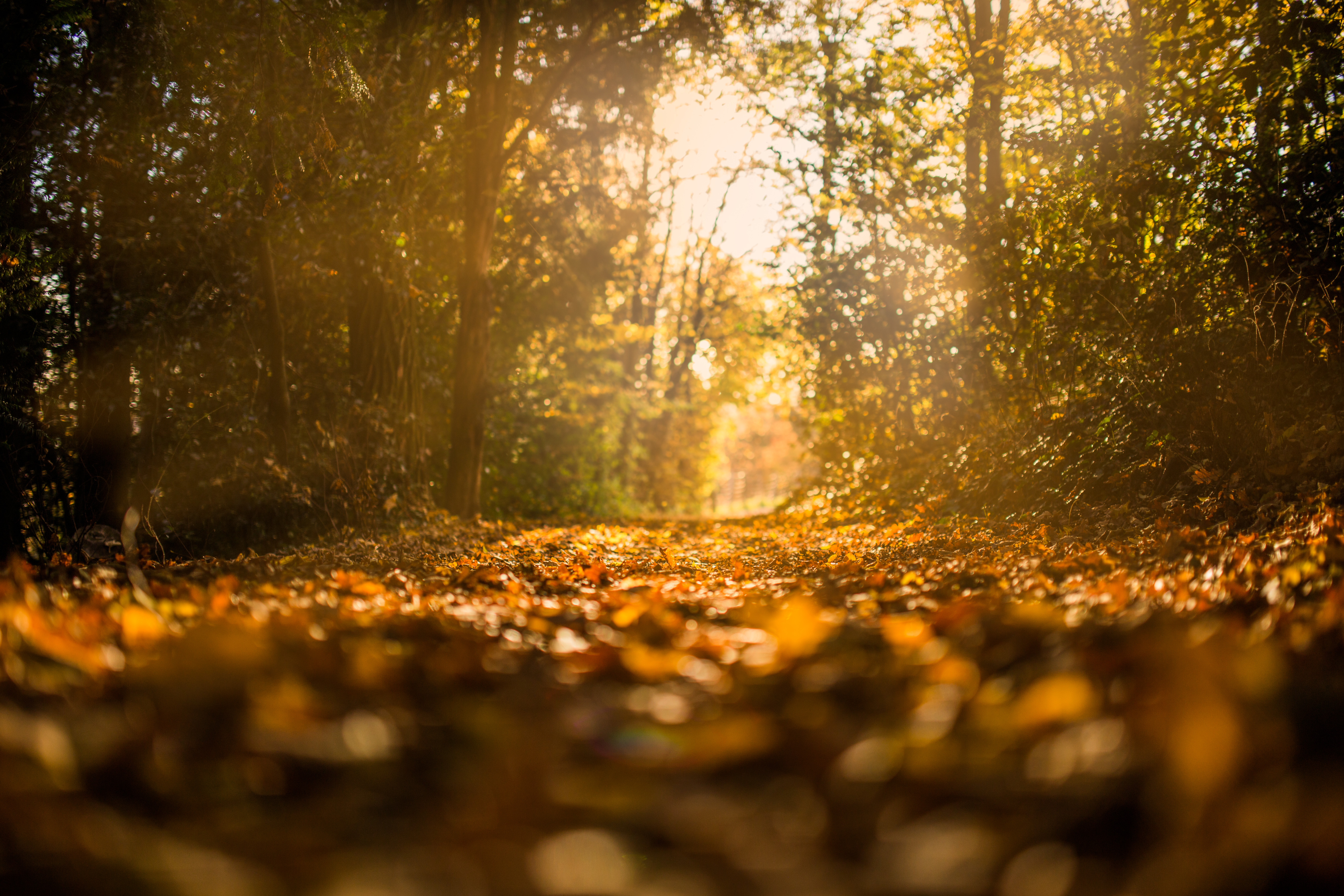 Free stock photo of autumn, fall, forest