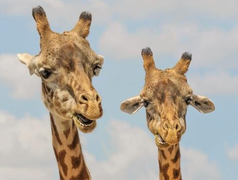 Free stock photo of animals, zoo, wildlife, mammal
