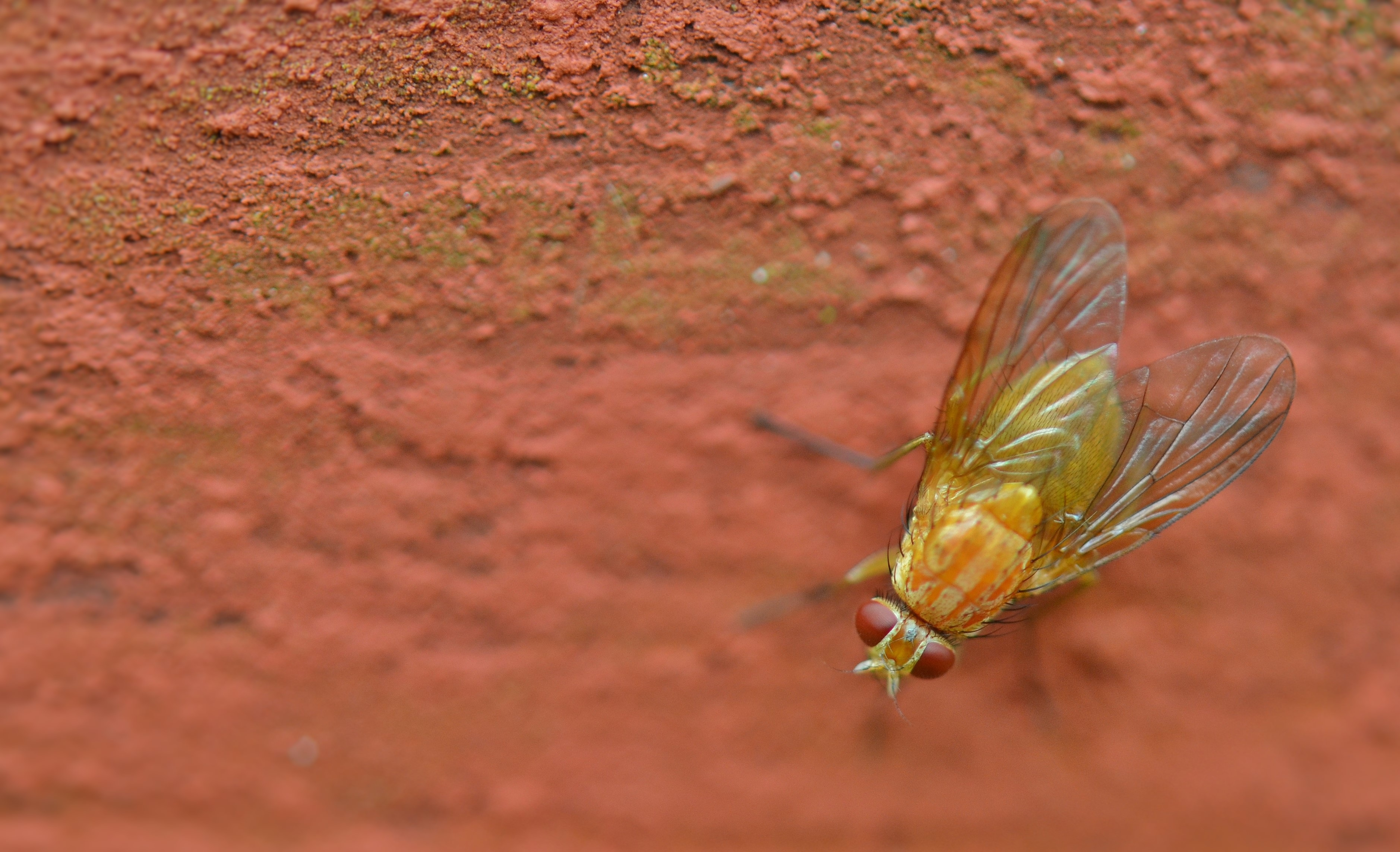 free stock photo of bug close up fly
