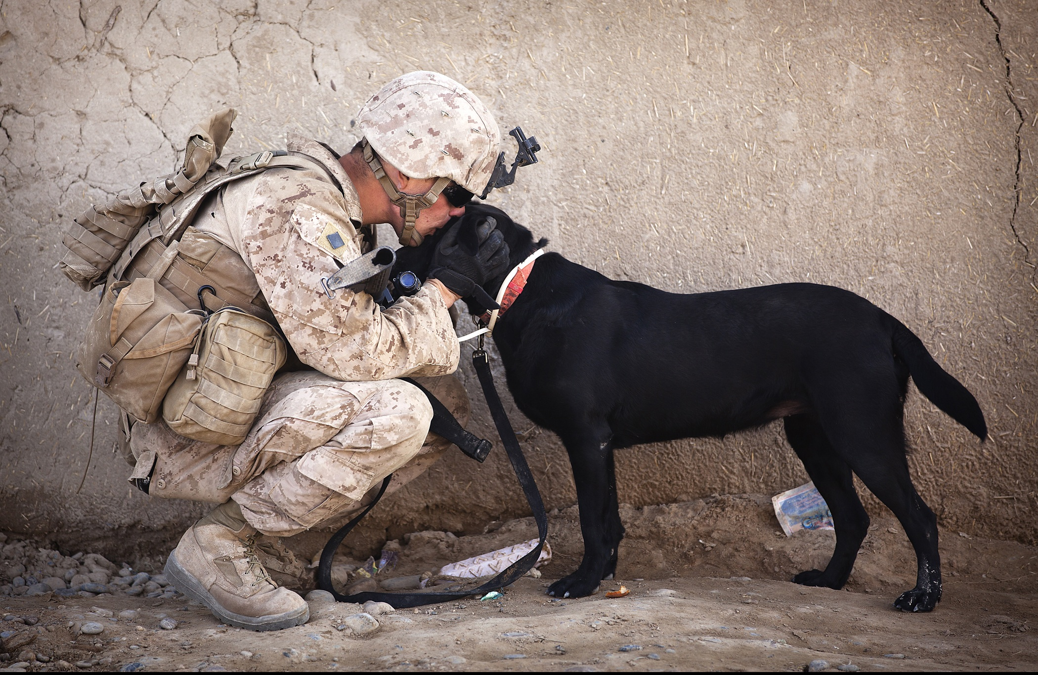 soldier-dog-companion-service.jpg (2100×1366)